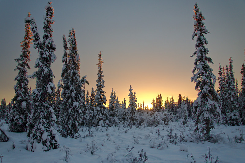 This was our sunrise at 10:30 am - this is the view out our window. Nice golden light on our snow adorned spruce trees.
