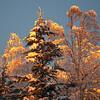 Illuminating the tree tops