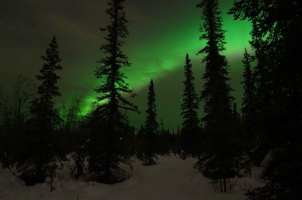 I went for a walk under the aurora on the trails behind Creamer's Field in Fairbanks. It was gorgeous! I decided to not do any timelapse so I left one camera at home and just shouldered a tripod and wandered around for a couple hours. I should do it this way more often!