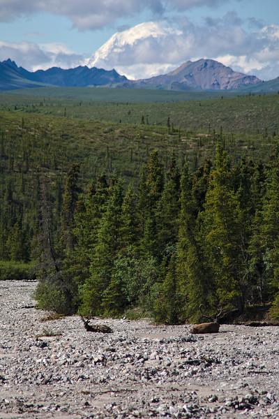 Caribou and Denali