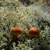 Mushrooms and Lichen