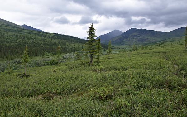 Nome Creek Landscape