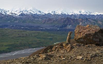 Eielson Alpine Trail/Thoro Ridge