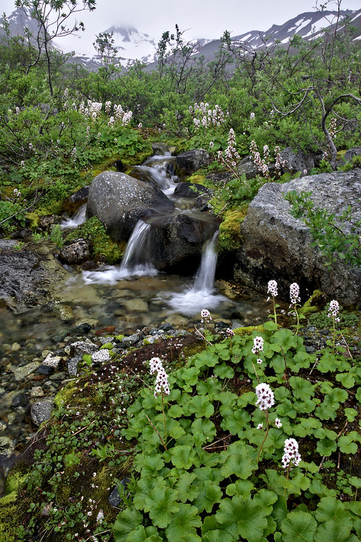 Wildflower Stream
