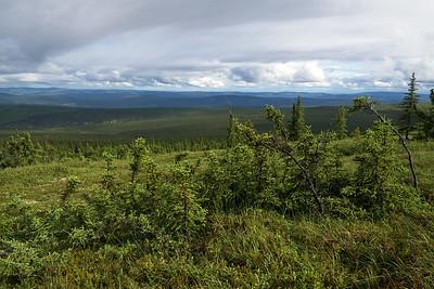 Stunted Spruce landscape