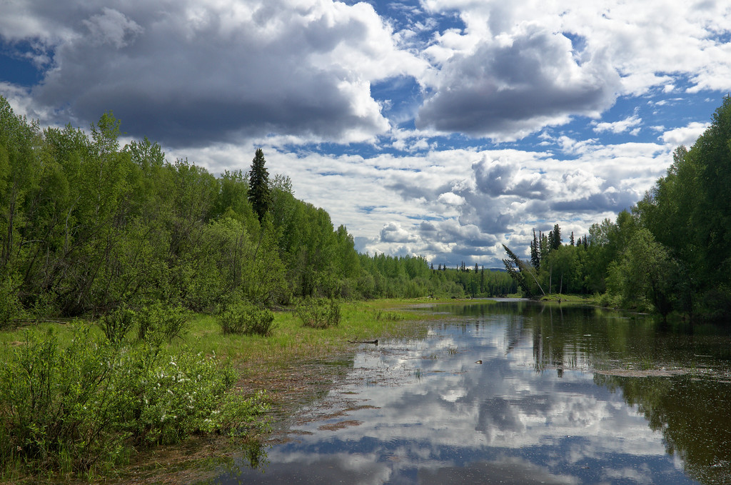 Reflections in the Flat Creek Slough into the Chena River.