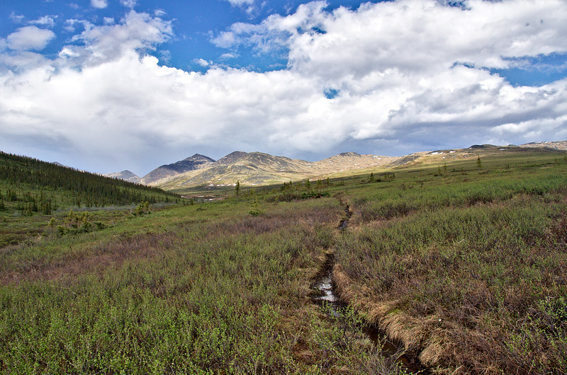 The swampy Nome Creek Trail