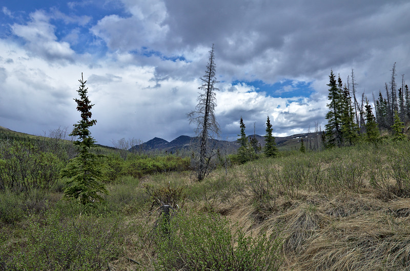 On the Nome Creek Trail