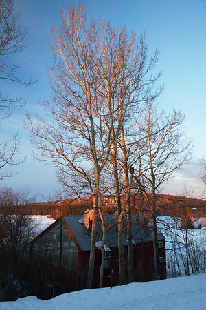 The Aspen trees light up once the Sun comes over the horizon.