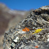Cool orange and yellow lichens