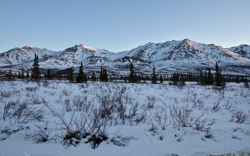 Morning light in Denali National Park - looking north from the Park Road.