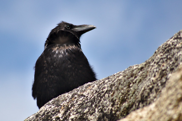 A raven came by to watch us as we ate trail mix. We left him nothing.