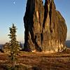 Asgard Tor. Spruce. Moon.