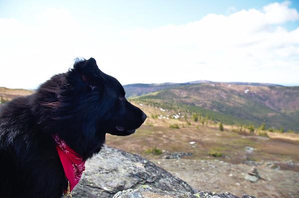 Even Moose Enjoys the View