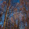 Birch Light an Contrast