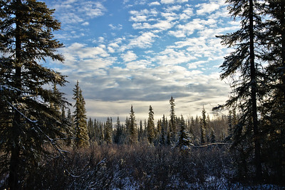 Boreal forest under gorgeous skies