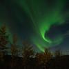 Aurora over birch trees