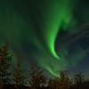 Aurora over birch trees 3