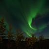 Aurora over birch trees 2