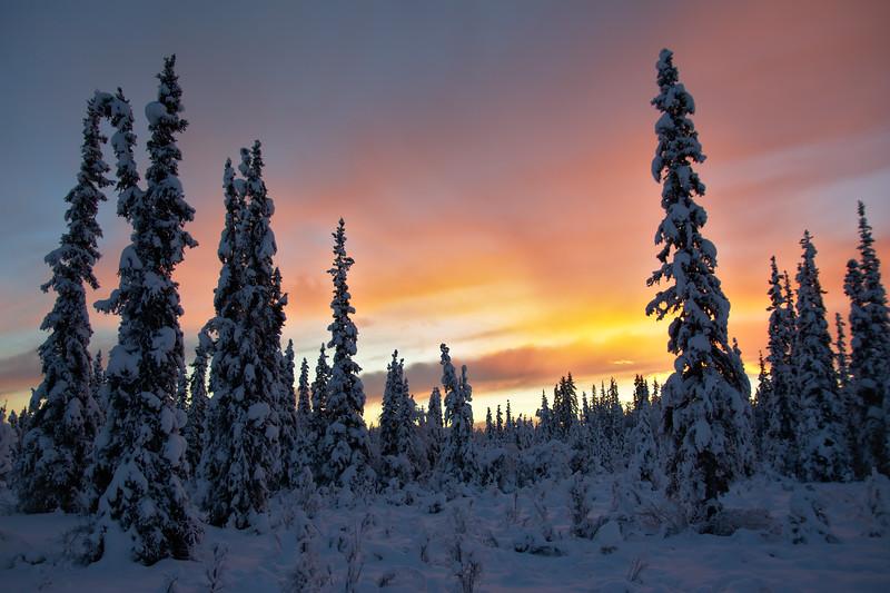 Soft Boreal Sunrise