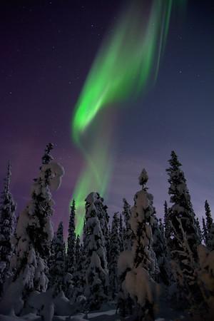 Boreal Forest Aurora