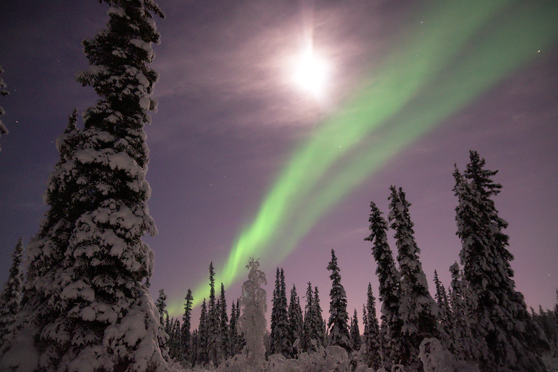 Aurora borealis and the moon over a snowy forest