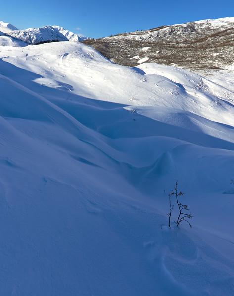 Snowy terminus of the Castner Glacier