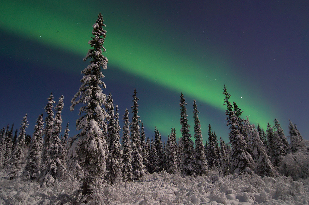 Aurora Borealis over Boreal Forest