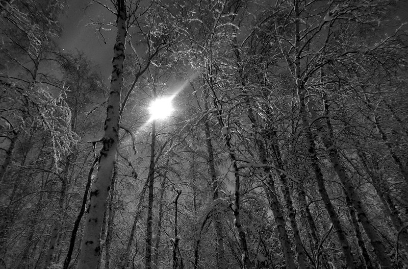 Birch Night
