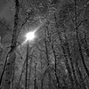Birch Night
