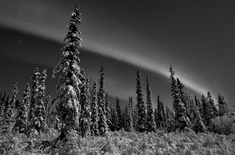 Spruce boreal forest under the aurora