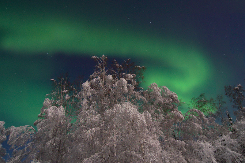 Aurora borealis over snow-covered birch trees