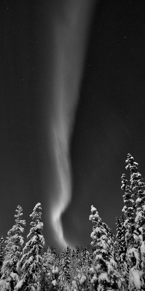 Aurora in Black and White - Vertical Panorama