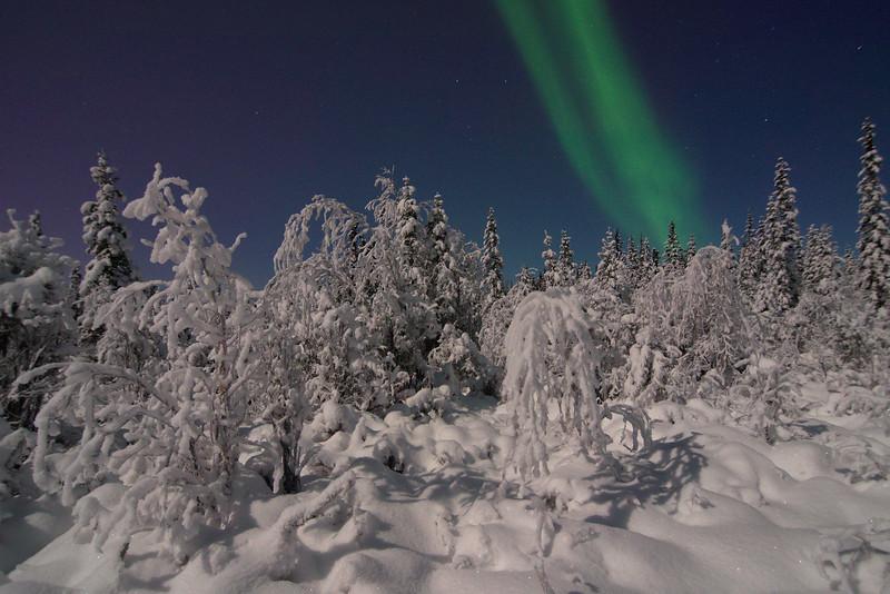 Subtle Forest Lights