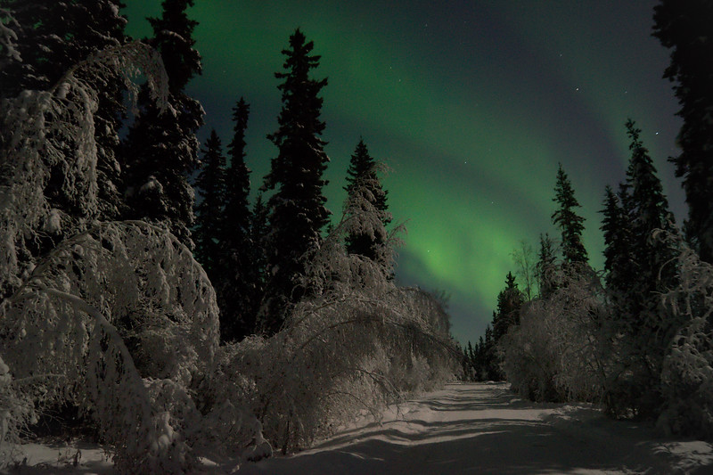 Northern lights over road and forest in Fairbanks, Alaska.