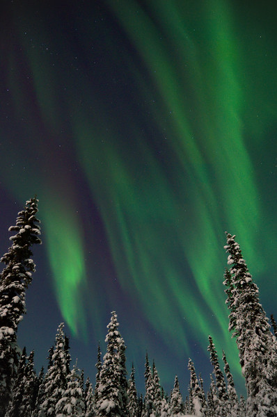 Vertical picture of aurora borealis over forest