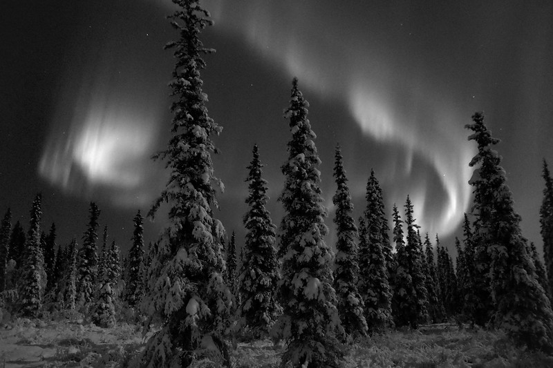 Boreal Winter - Black and White, Day and Night