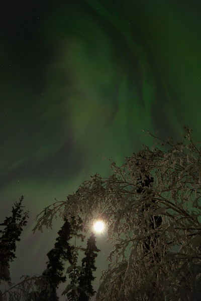 Pulsating aurora borealis after a large geomagnetic storm