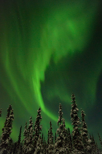 Vertical image of green aurora over forest