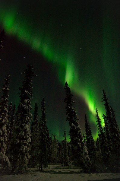 A bright auroral band over spruce trees