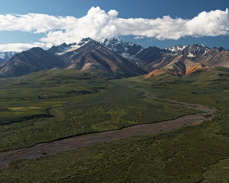 Summer - Denali National Park