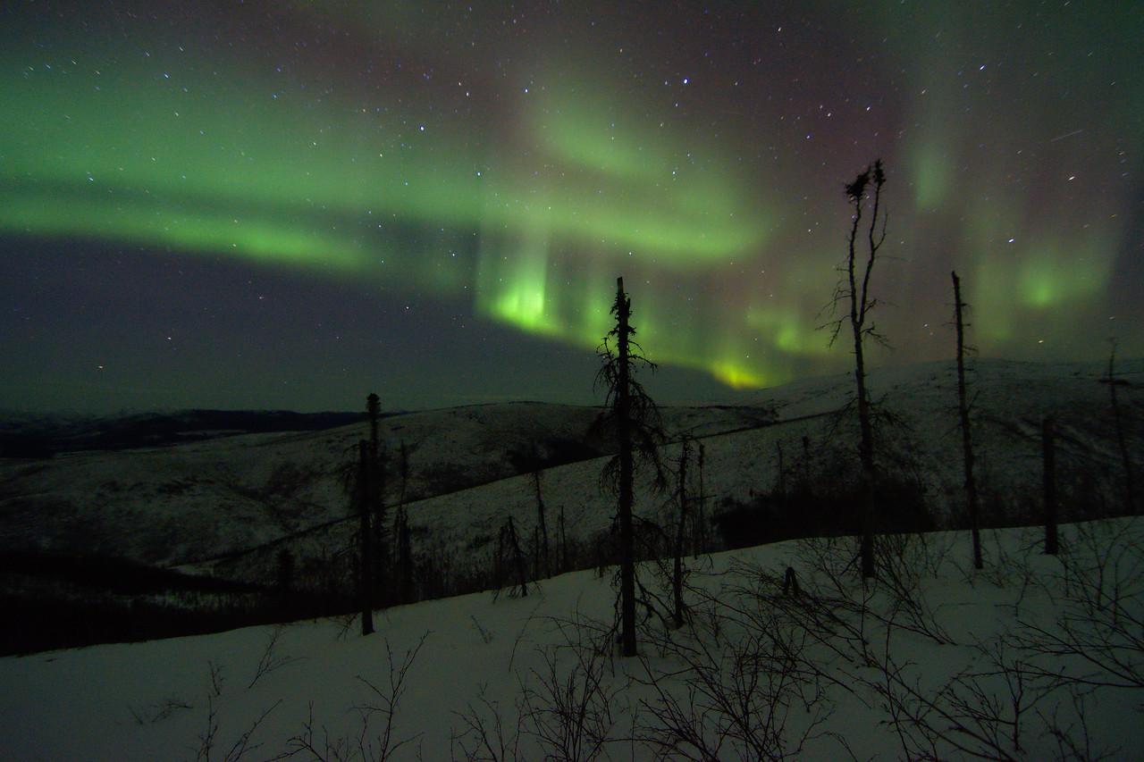 Green aurora borealis dancing over the Chena River Valley