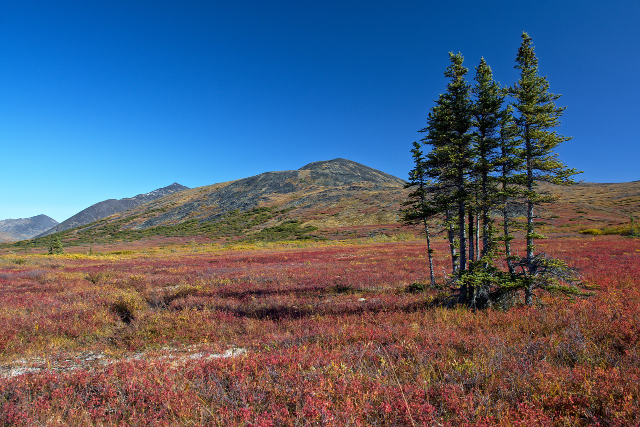 orgeous fall foliage on the return along the Nome Creek Trail