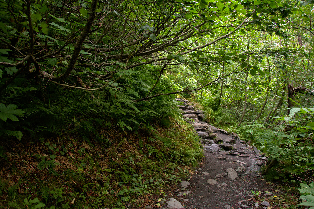 Gorgeous greenery and fern-lined trail with a roof of alder