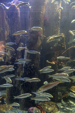 Fisheries aquarium at the Alaska Sea Life Center