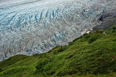 Meadows Over Exit Glacier