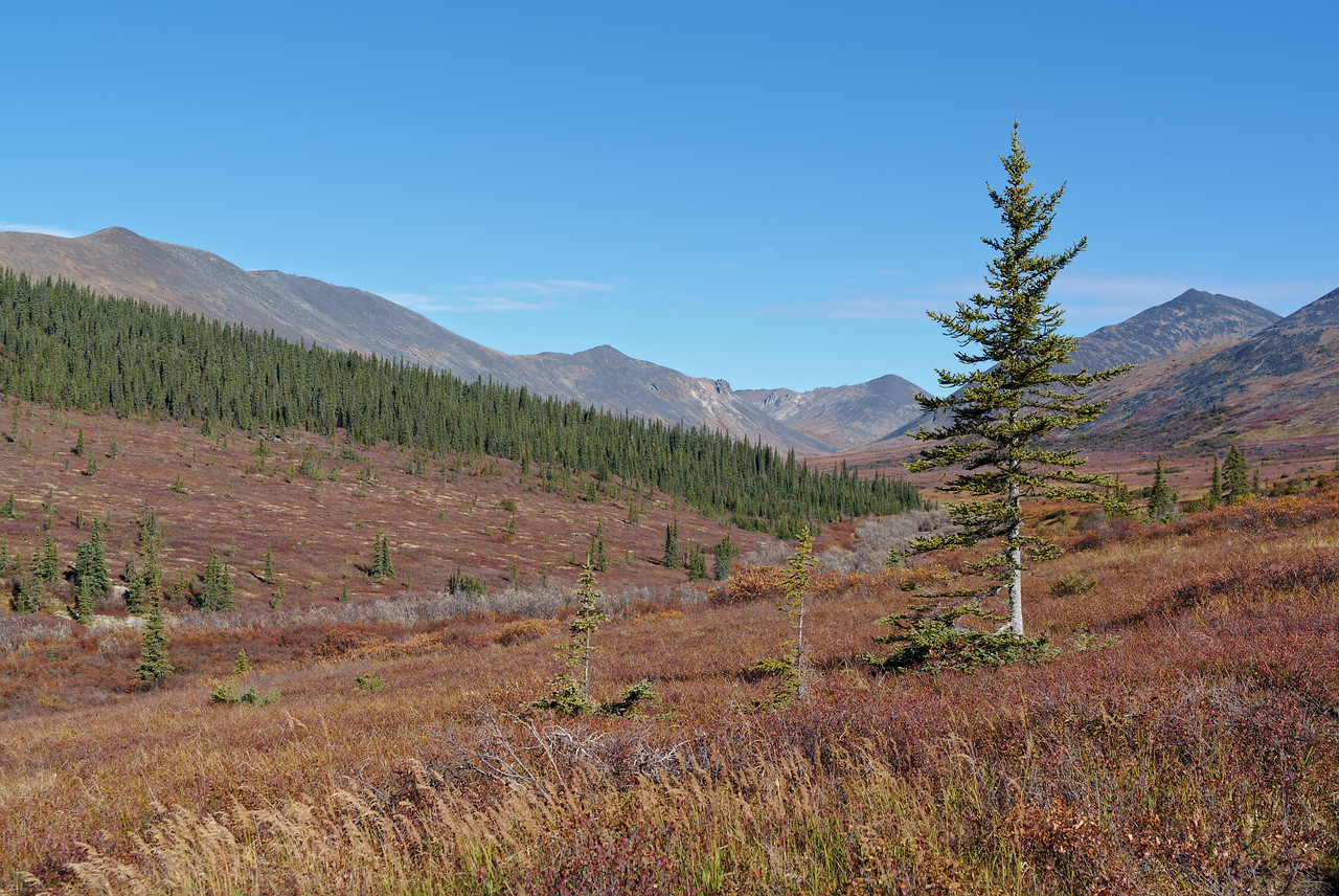 Nome Creek Valley in September