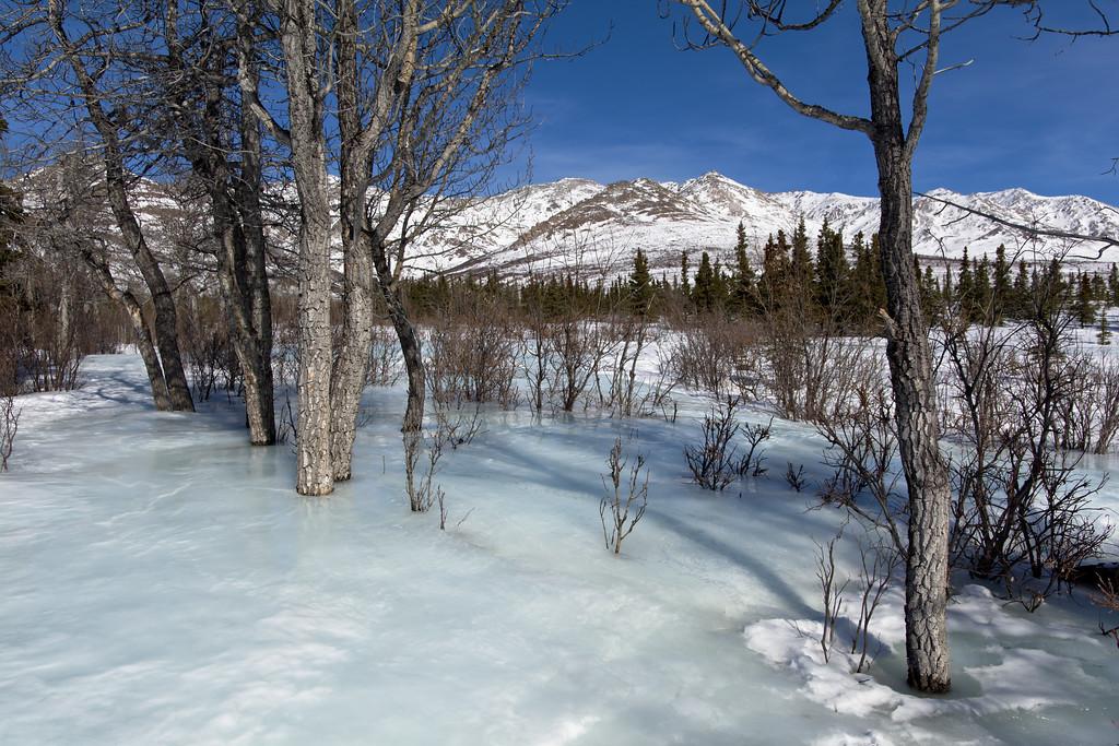 Overflow ice on the Savage Alpine Trail