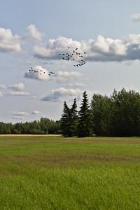 Cranes Arrive