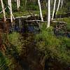 Birch Wetlands